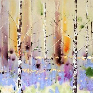 Bluebells amongst the birch
