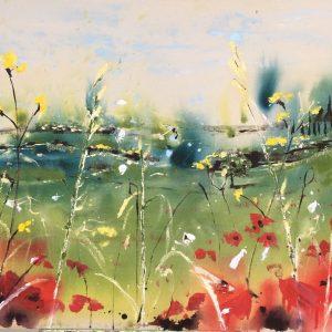 Poppies in Umbria